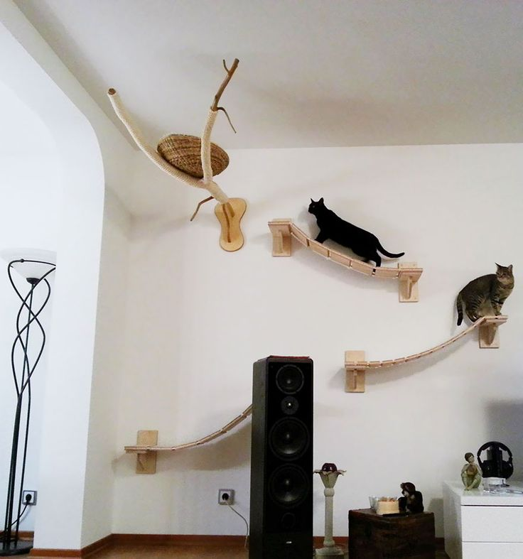 Room designed for those who love cats