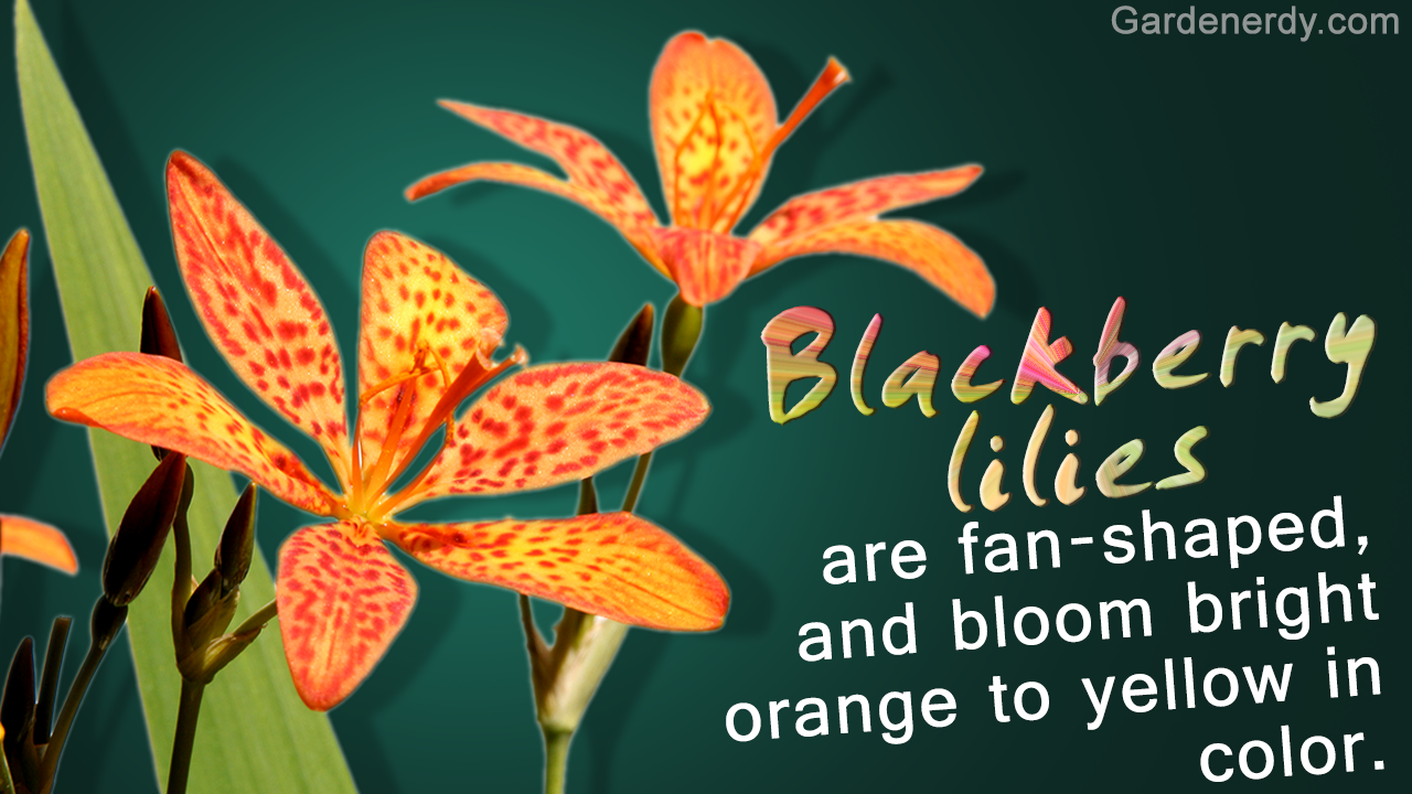 Orange Flower Names